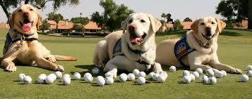 golf dog friendly