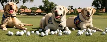 golf dog friendly