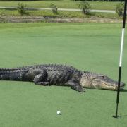 curiosità sul golf